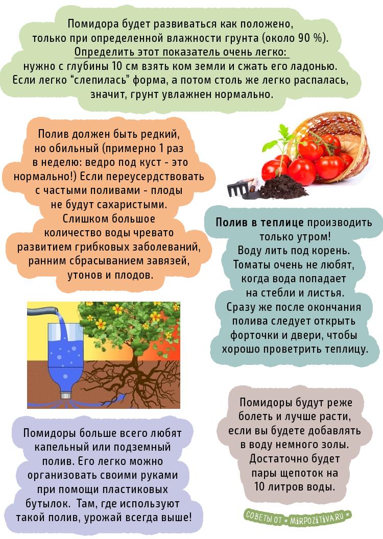 советы по поливу помидоры