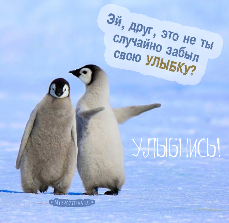 пингвины, Эй, друг, это не ты случайно забыл свою УЛЫБКУ?