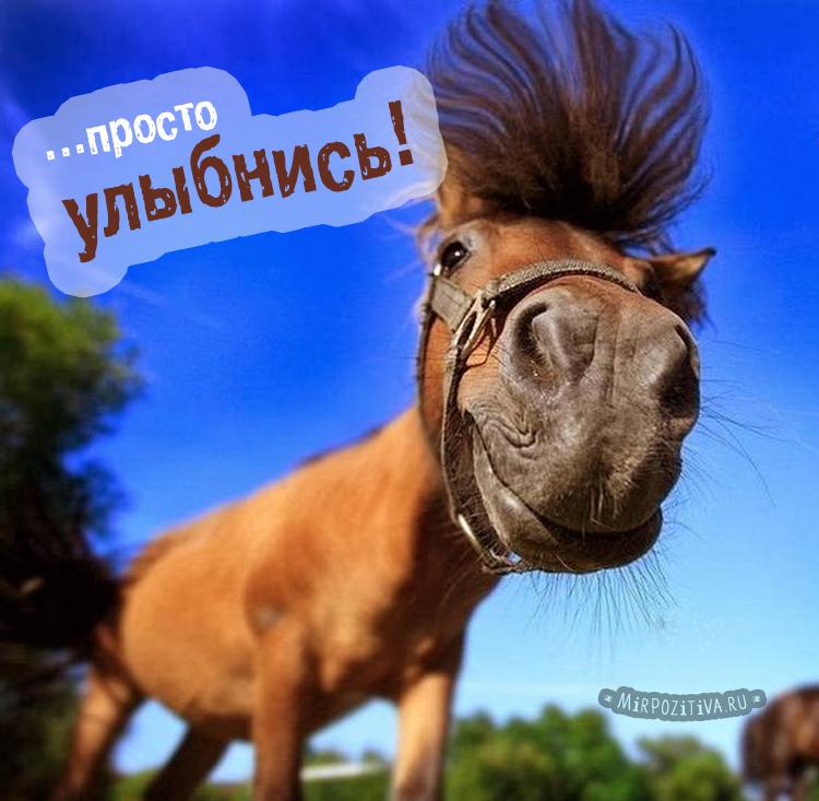 лошадь, Просто улыбнись!