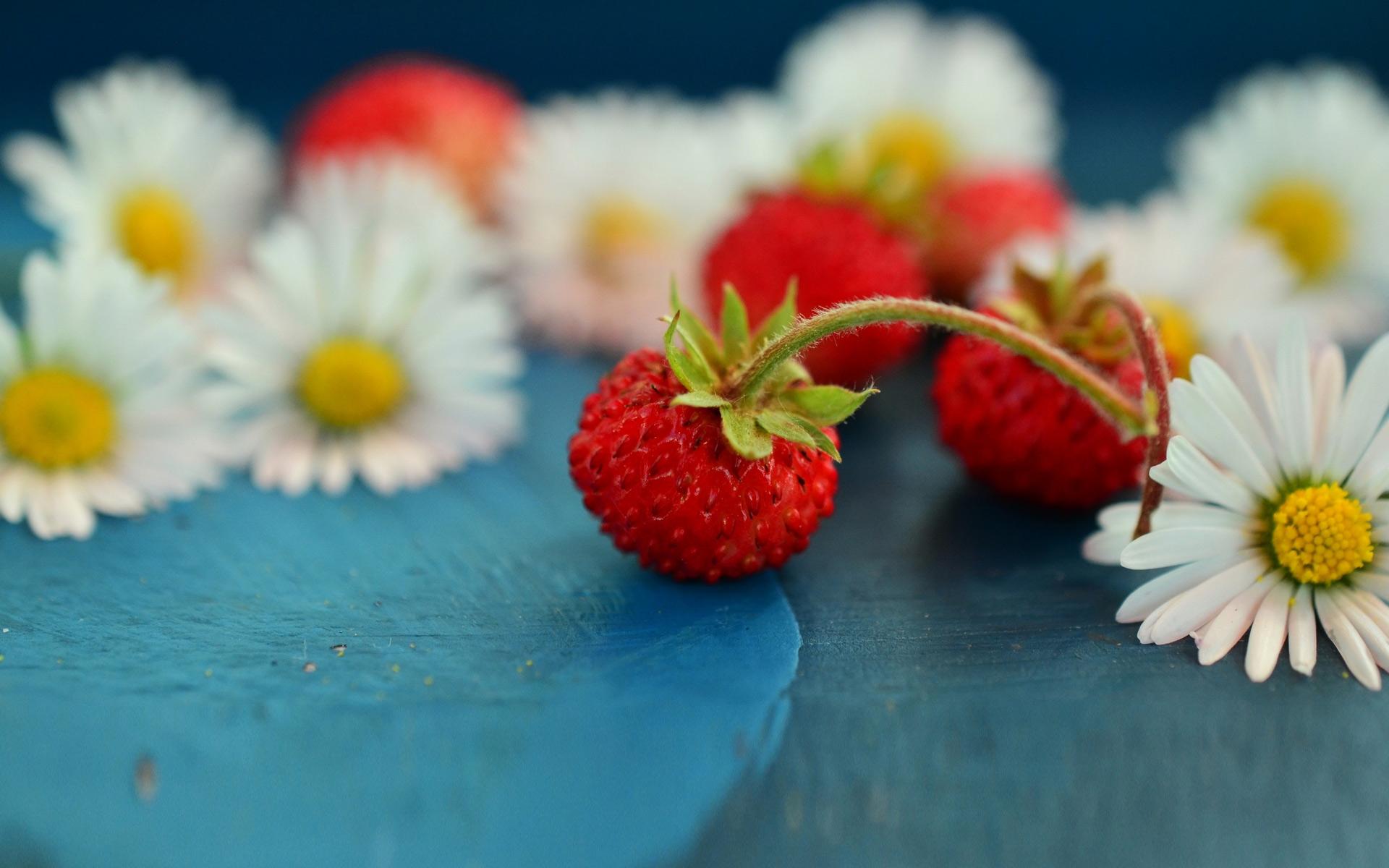 земляника и цветы полевые