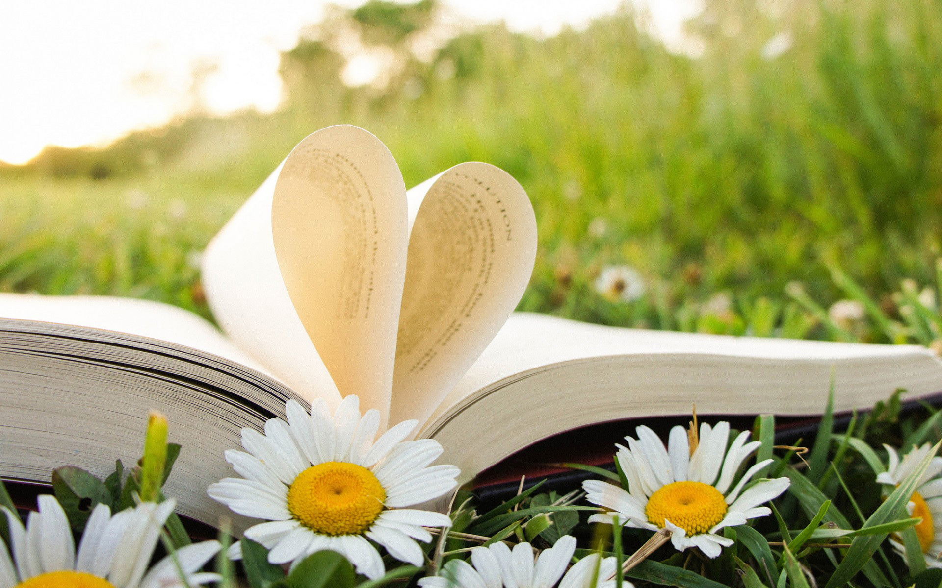 книга и ромашка