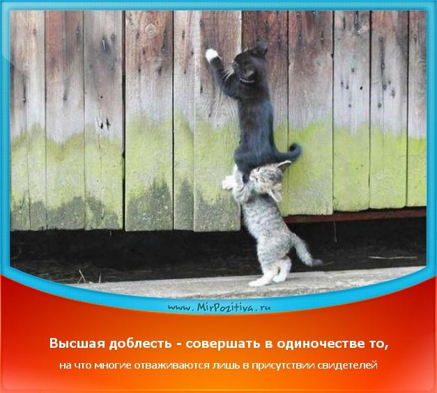 позитивчик дня: Высшая доблесть - совершать в одиночестве то, на что многие отваживаются лишь в присутствии свидетелей
