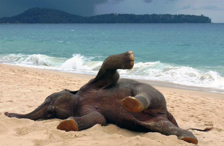 Слонёнок впервые на пляже