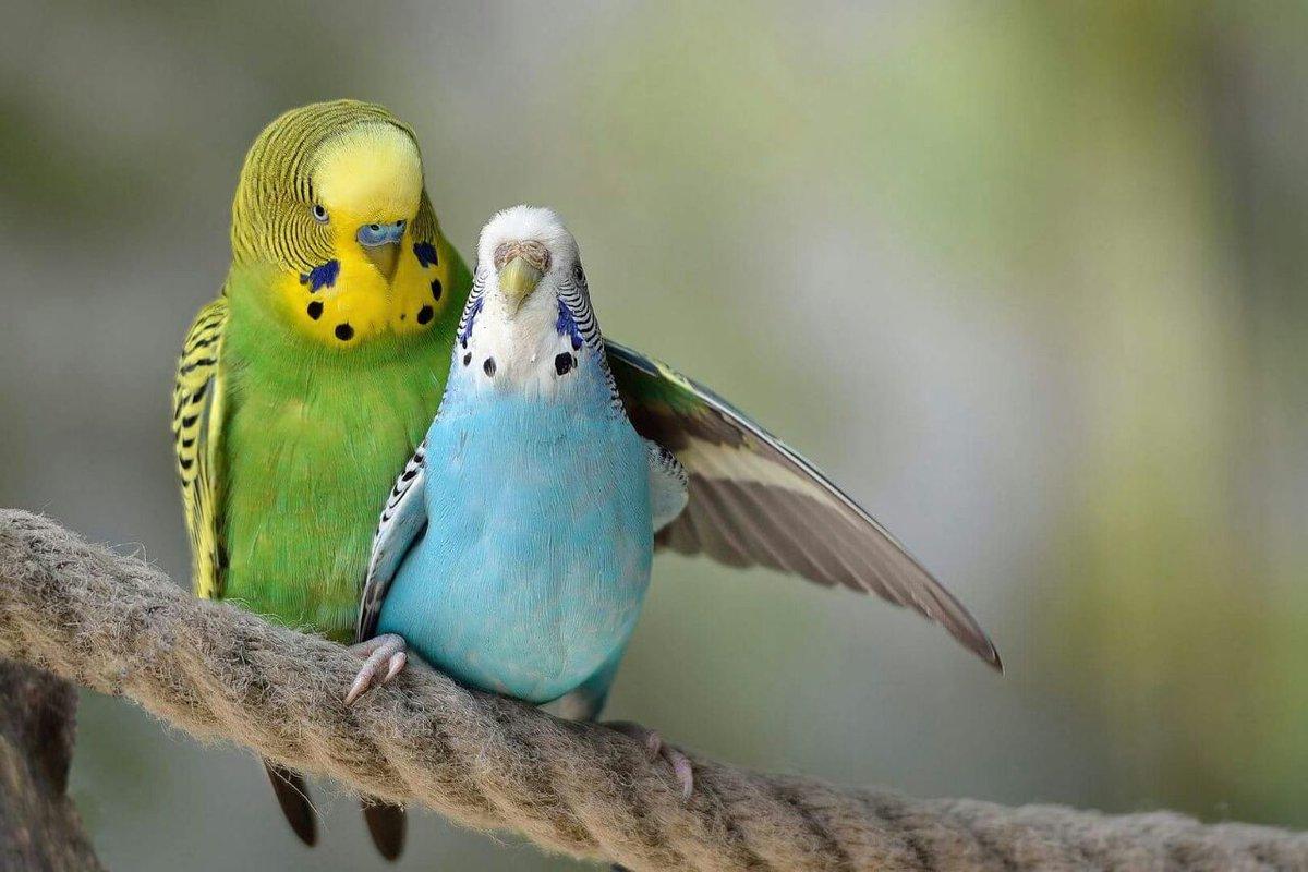 попугайчик обнимает