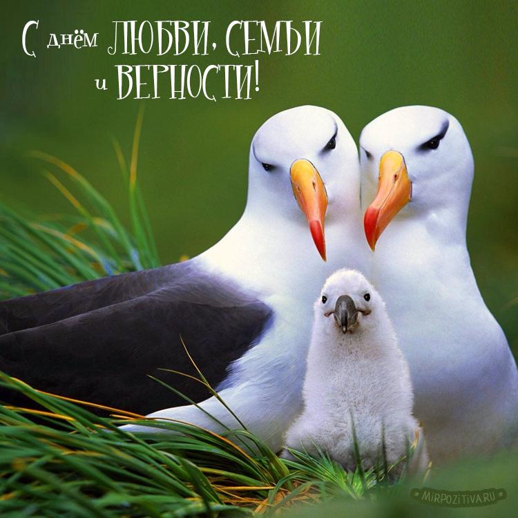 птички с днем семьи
