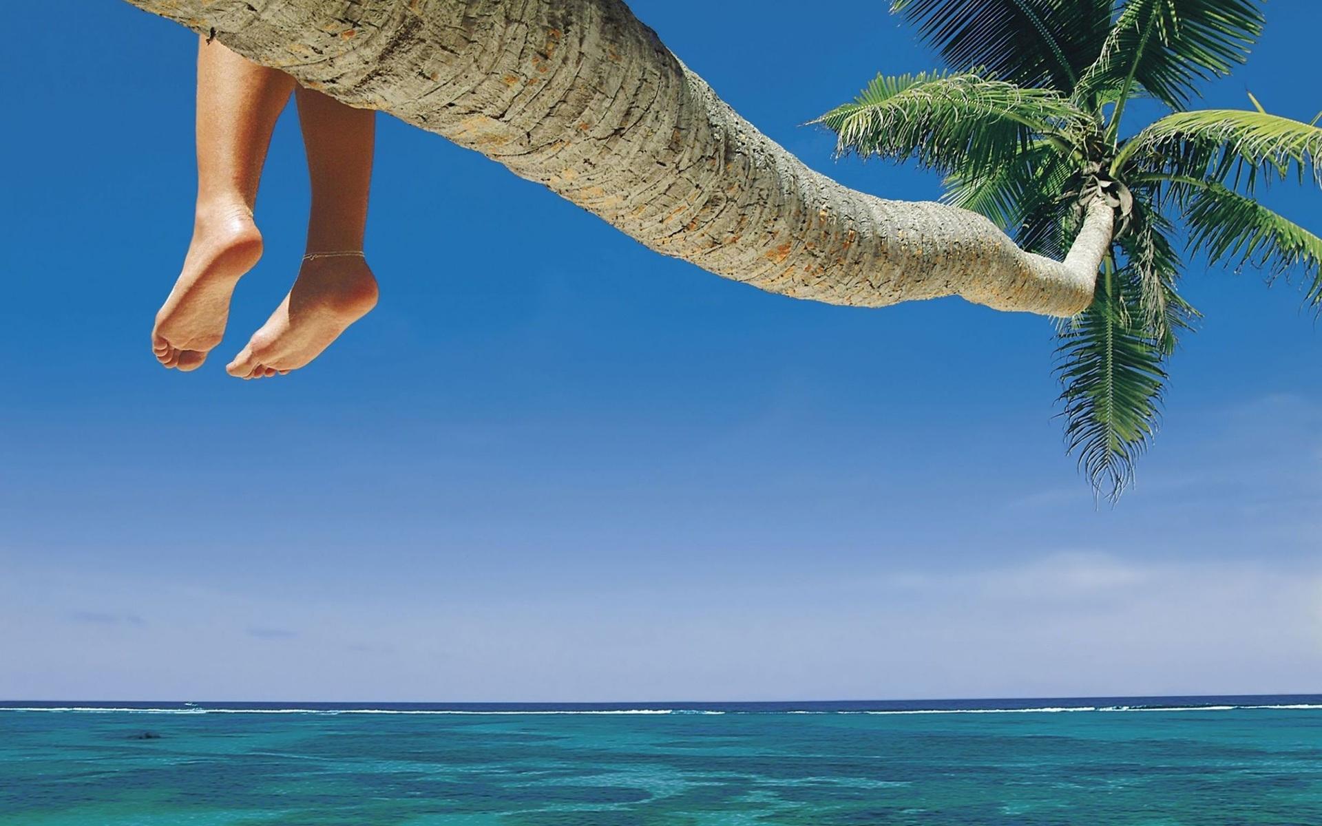 ноги пальмы