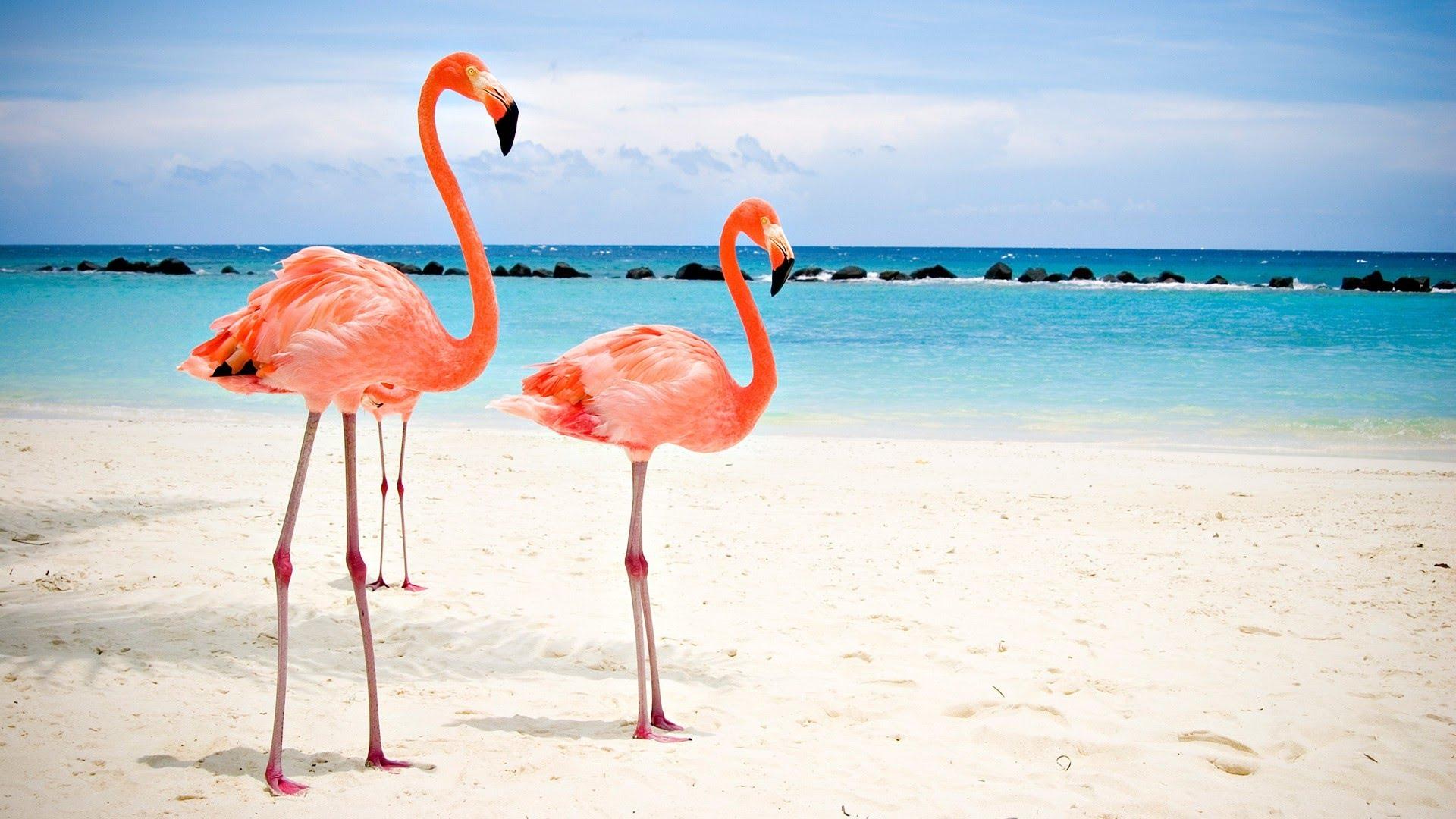 фламинго и океан