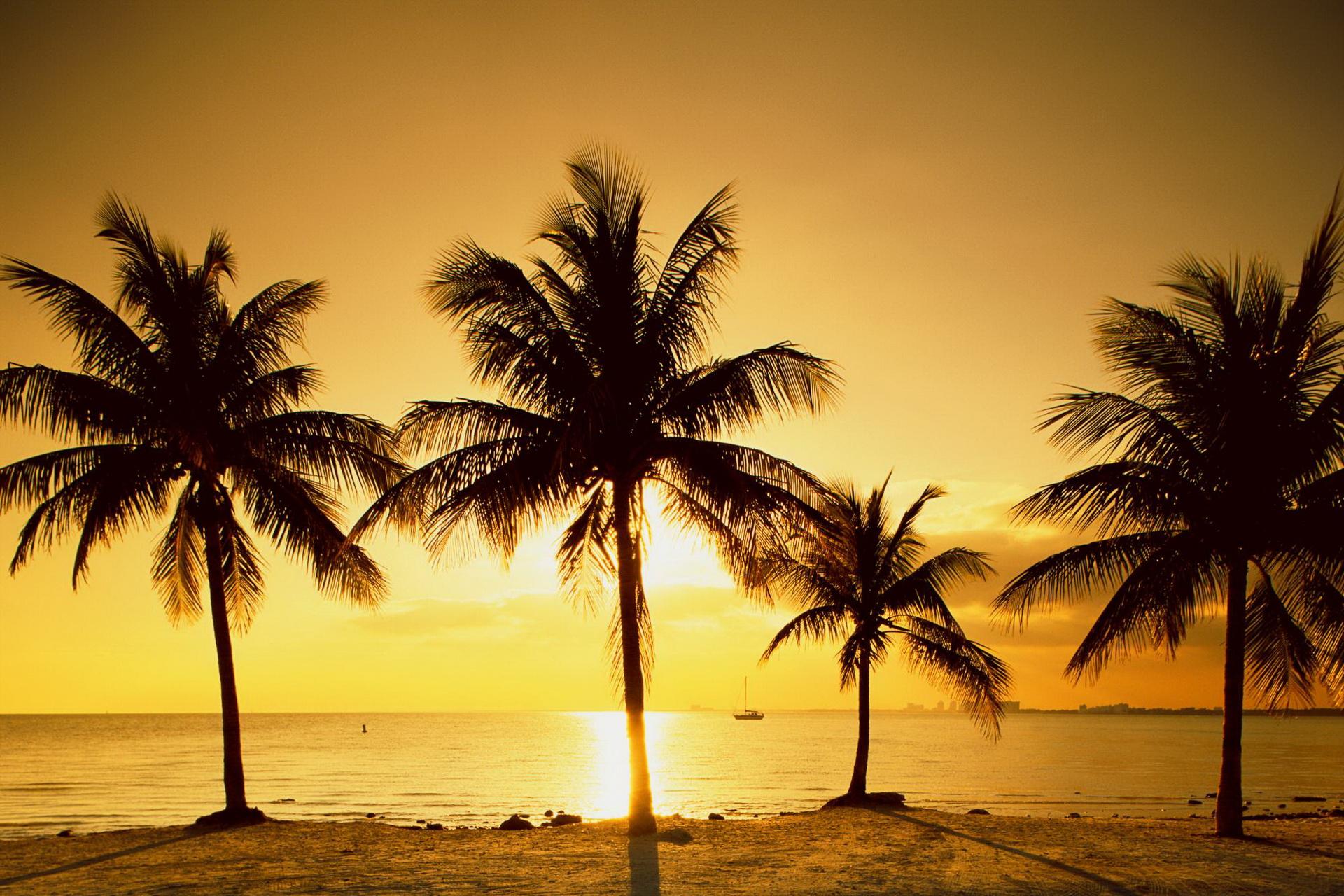 пальмы закат