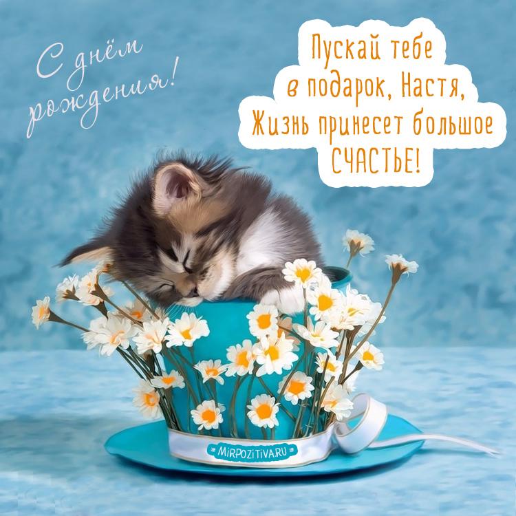котенок в горшке - Пускай тебе в подарок, Настя, Жизнь принесет большое счастье!