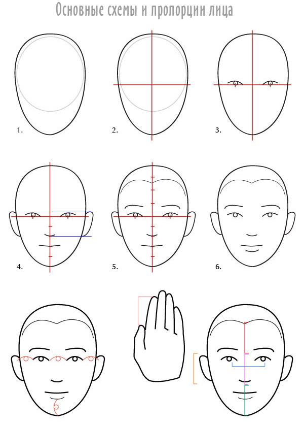 схемы и пропорции лица