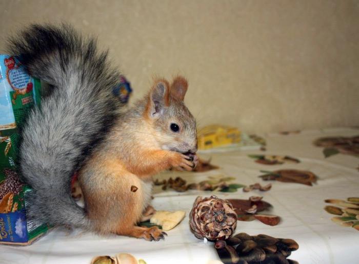 белка Соня кушает орешки