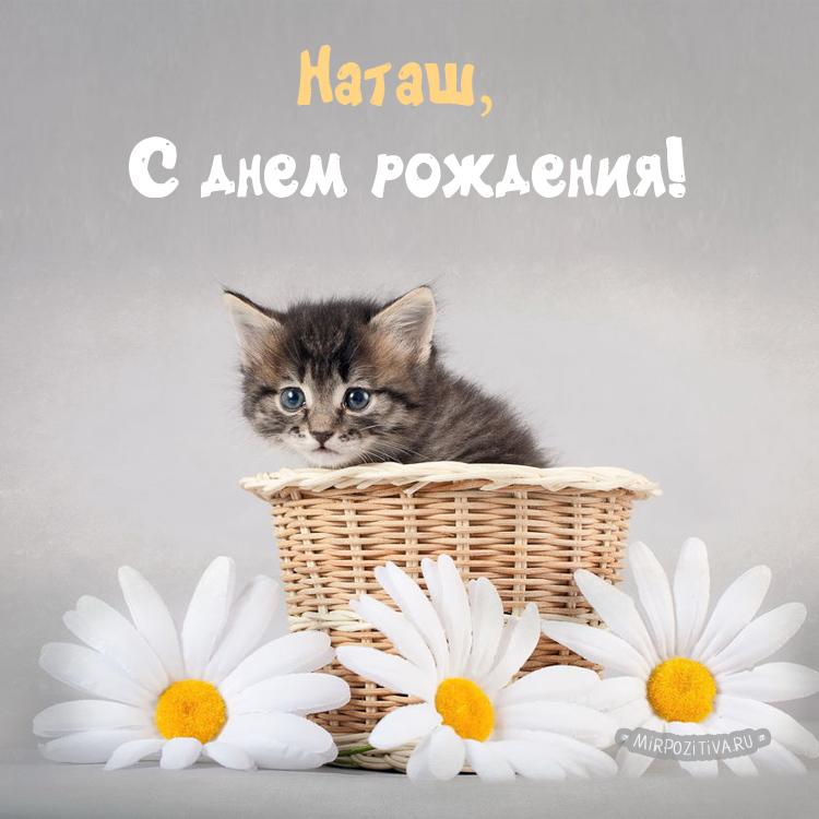 котенок в ромашках Наташ, С днем рождения!