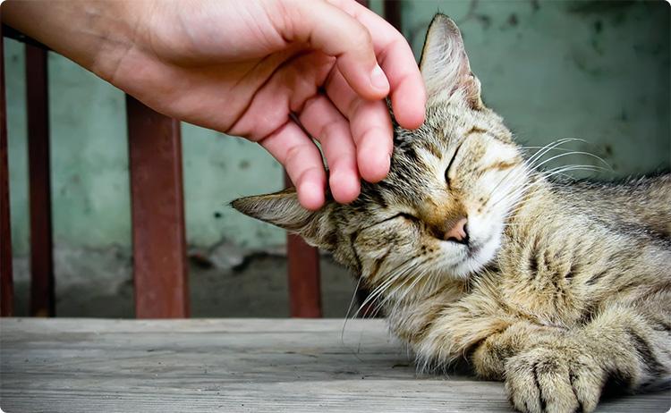 гладить кошку