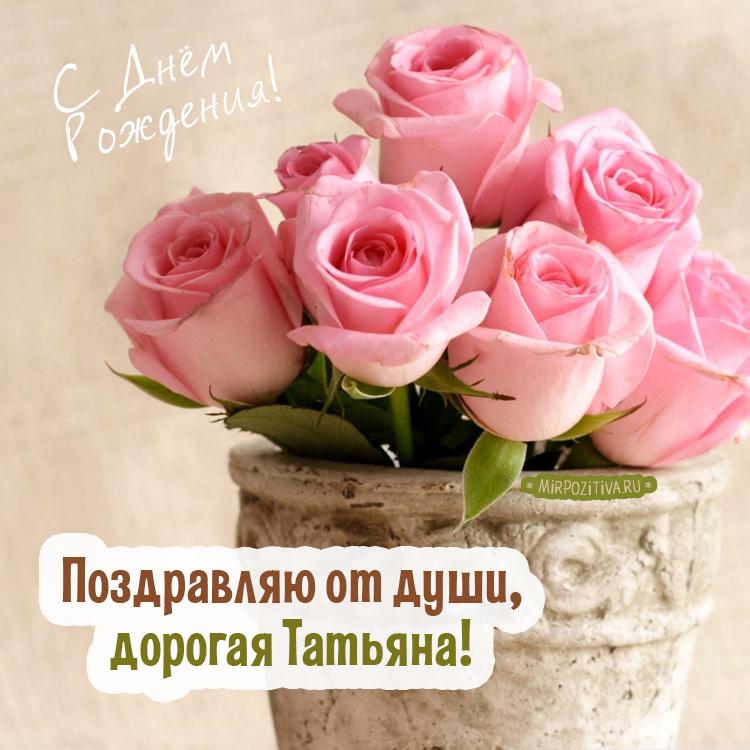 розовые розы в горшке - Поздравляю от души, дорогая Татьяна!