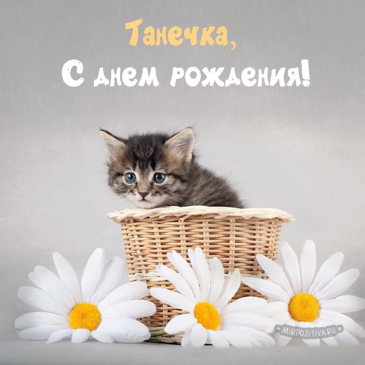 котенок в цветах - Танечка, С днем рождения!