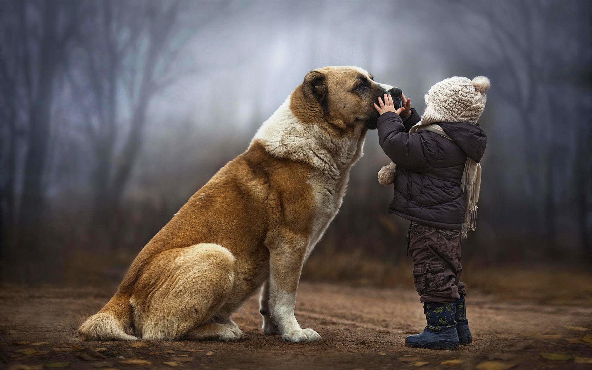 ведь человек и собака фото картинки что поклонники смогли