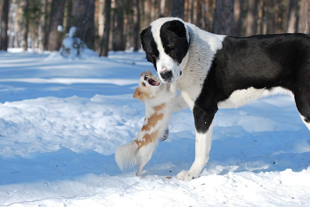 большая собака и маленькая
