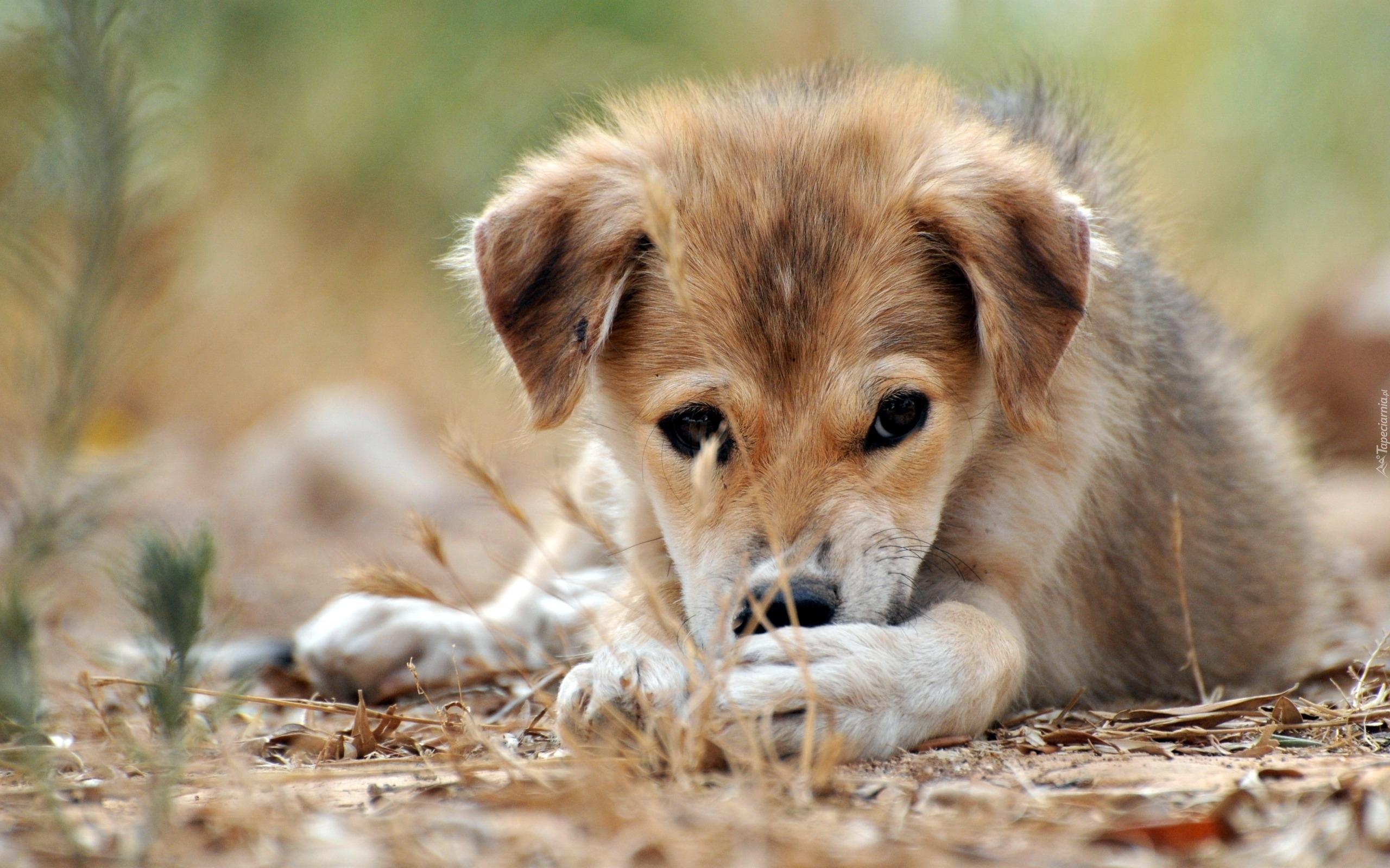 щенок дворняжка