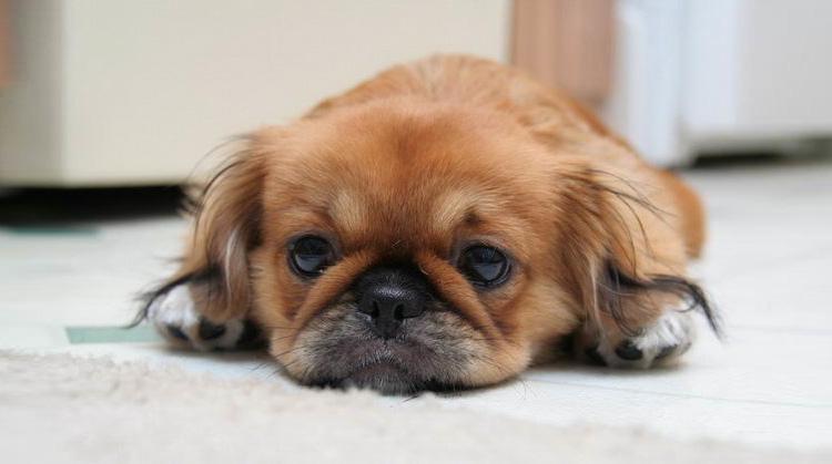 Чудесная коллекция фото собак
