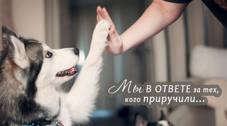 собака дай 5