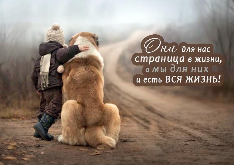 собака друг человека, мы для них вся жизнь