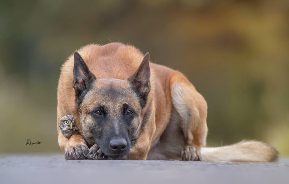 пес и сова
