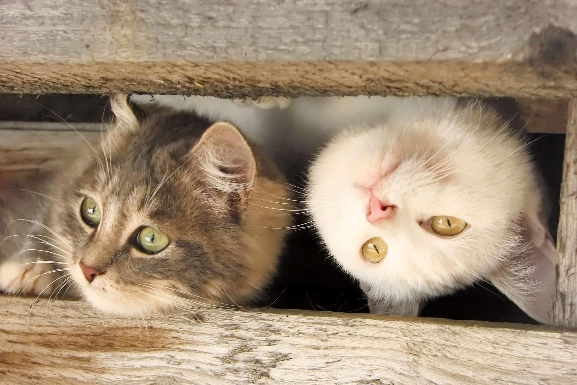 мясо относят красивые картинки на телефон со смешными кошками тяжелых