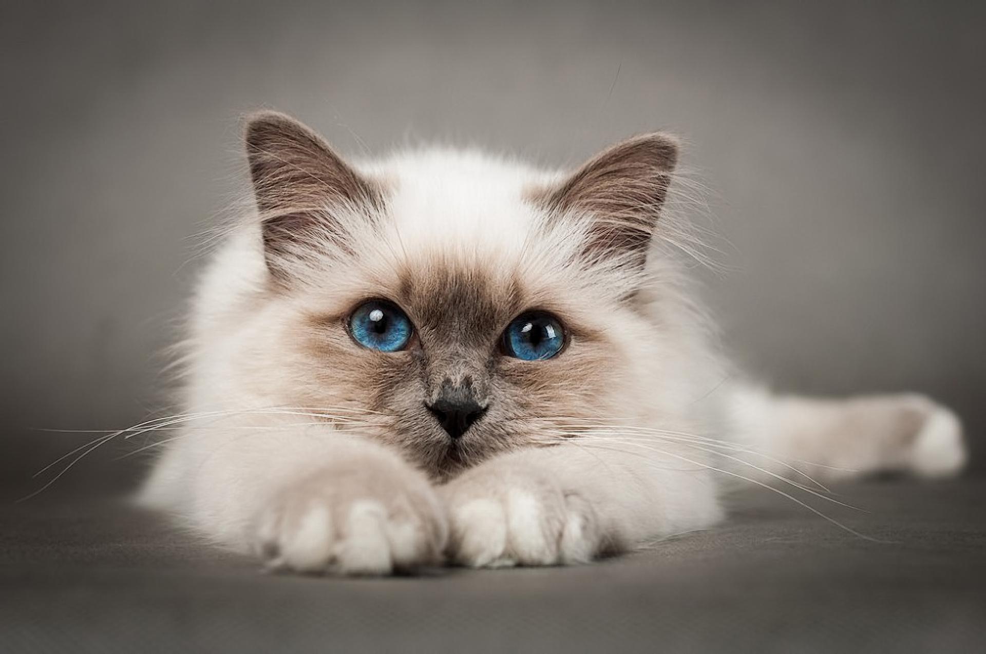 свежем картинки котов самые красивые объём тандыра его