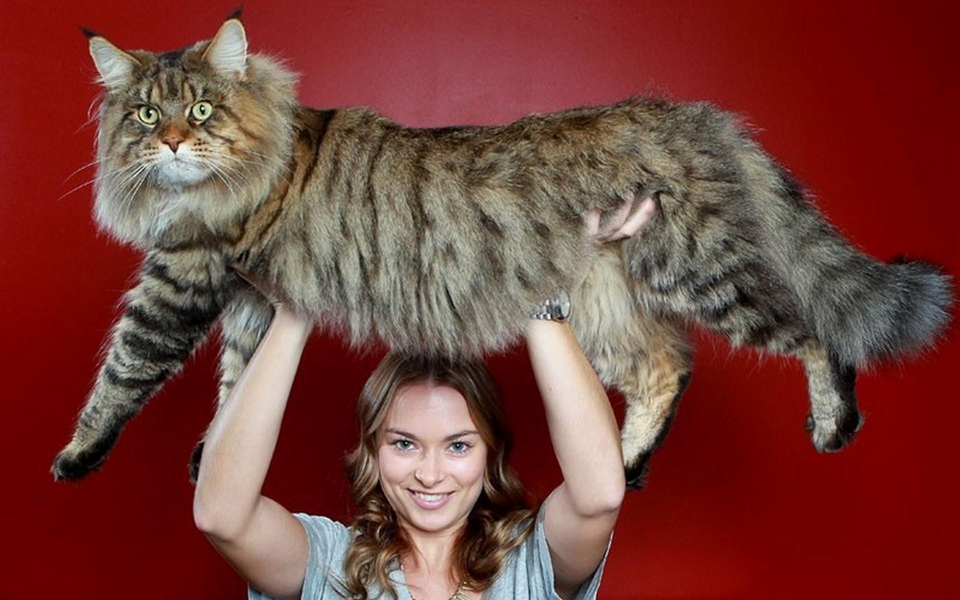 мало смотреть картинки самых больших котов современная мебель поддонов