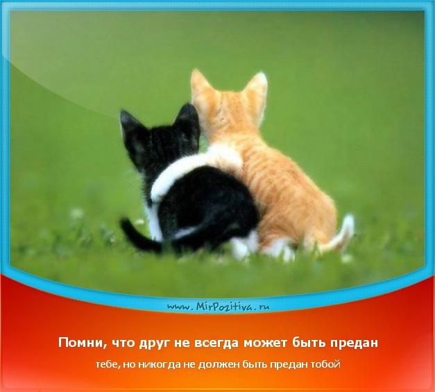 позитивчик дня: Помни, что друг не всегда может быть предан тебе, но никогда не должен быть предан тобой