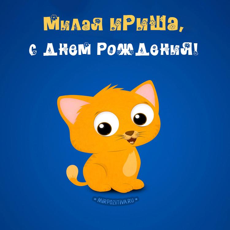 котик - милая Ириша