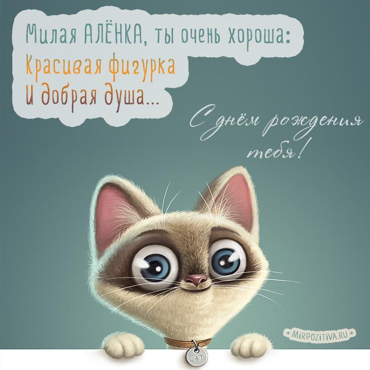 котенок милая Алёнка