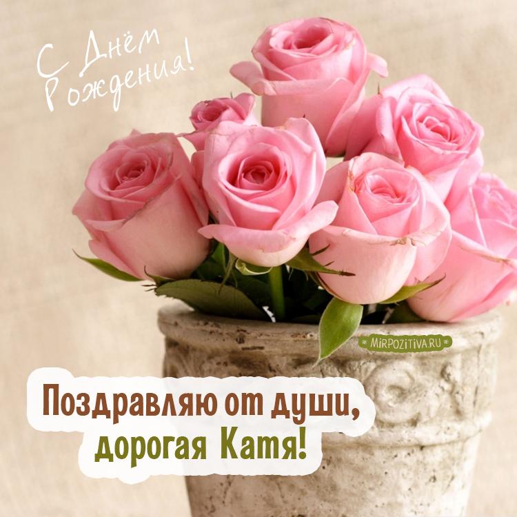 розовые розы - Поздравляю от души, дорогая Катя!