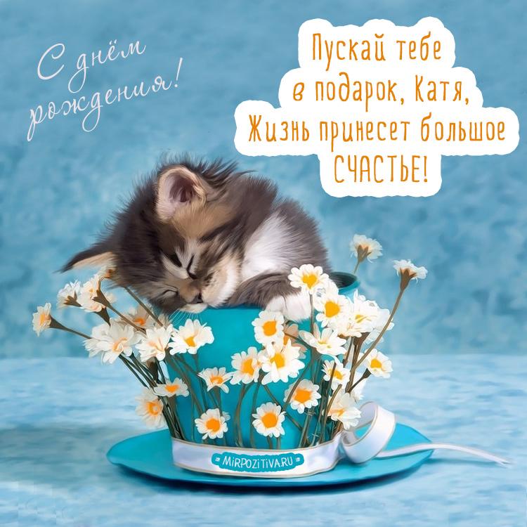 котенок в ромашках - подарок Кате