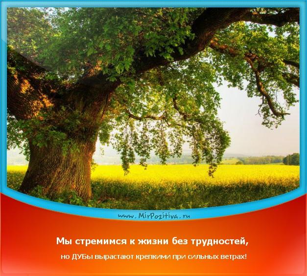 Мы стремимся к жизни без трудностей, но дубы вырастают крепкими при сильных ветрах