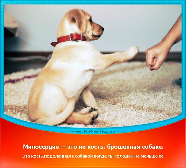 Милосердие — это не просто кость, брошенная собаке. Это кость, поделенная с собакой, когда ты голоден не меньше ее