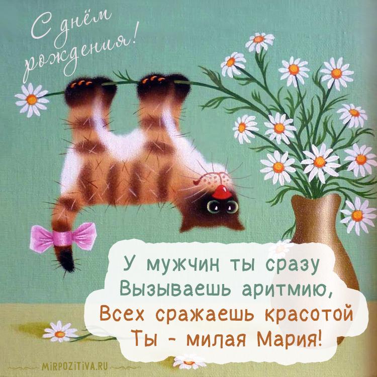 котик вверх тормашками на цветке