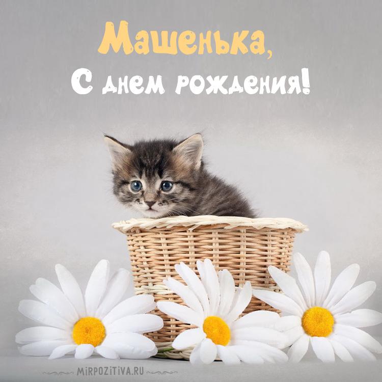 котенок в корзинке Машенька с днем рождения