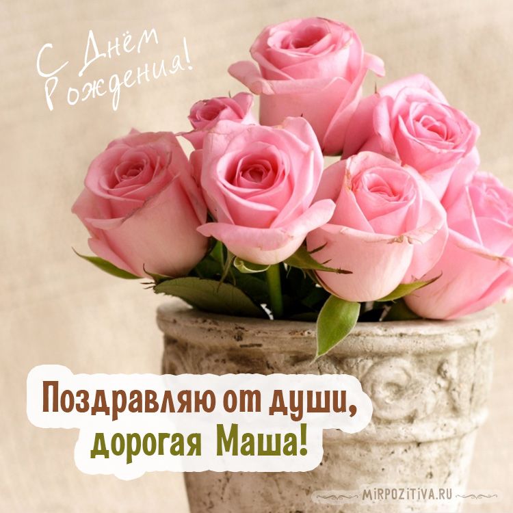 розы в горшке для Маши