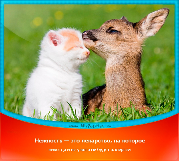 позитивчик дня: Нежность — это лекарство, на которое никогда и ни у кого не будет аллергии