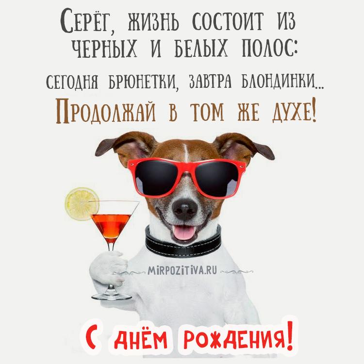 собака поздравляет серегу: Серёг, жизнь состоит из черных и белых полос