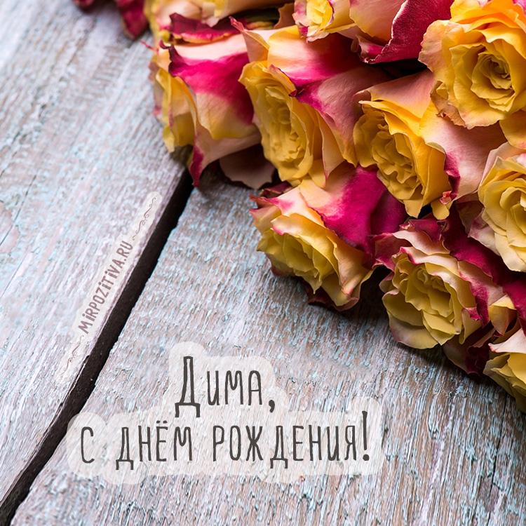 розы Дима с днем рождения