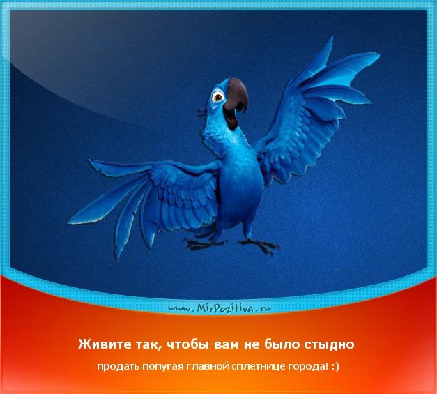 Живите так, чтобы вам не было стыдно продать домашнего попугая главной сплетнице города
