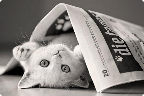 котик с газетой