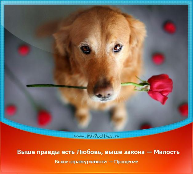 позитивчик дня: Выше правды есть Любовь, выше закона — Милость, выше справедливости — Прощение