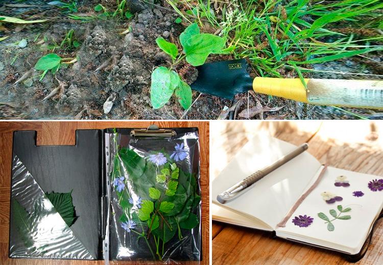 инструменты для сбора гербария