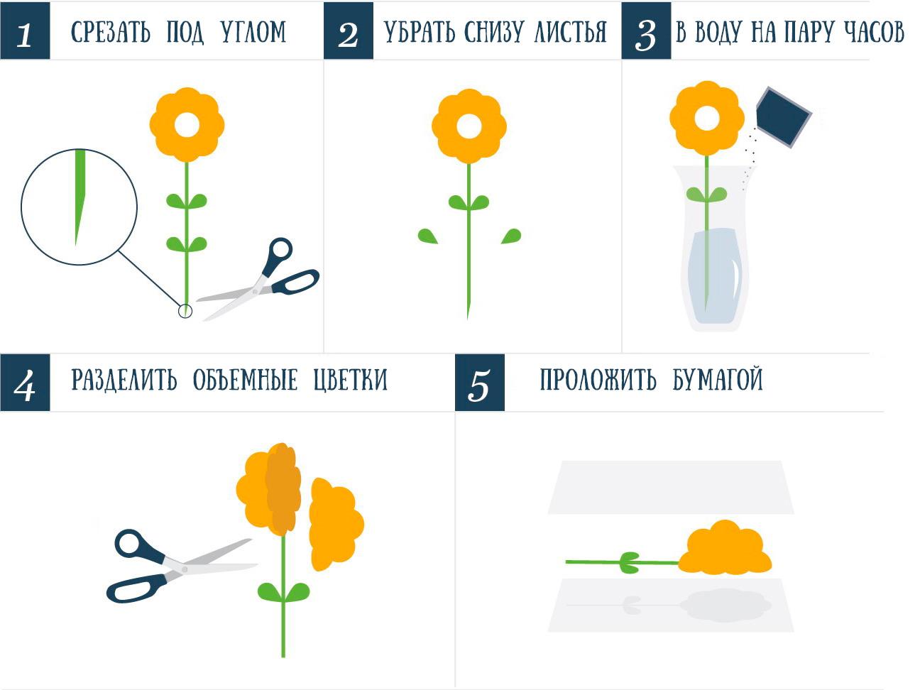 как подготовить цветы для сушки гербария