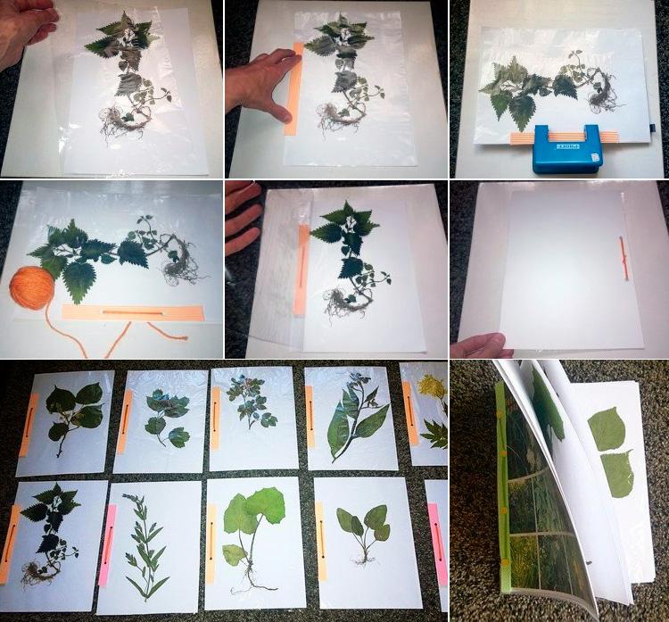 оформление гербария в школу