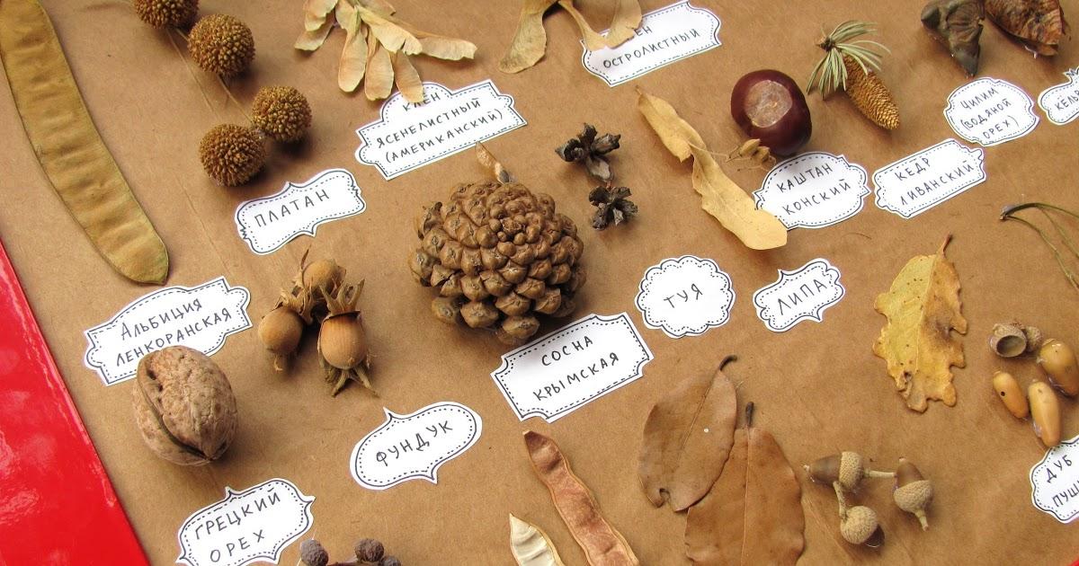оформление засушенных растений шишек орехов листьев