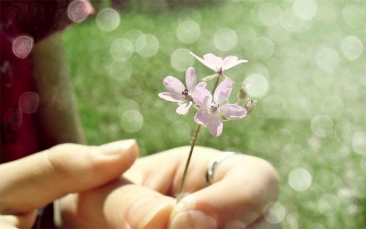 цветочек в руке